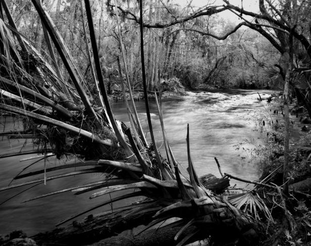 Hillsborough River 3