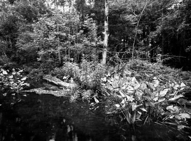 Hillsborough River 2