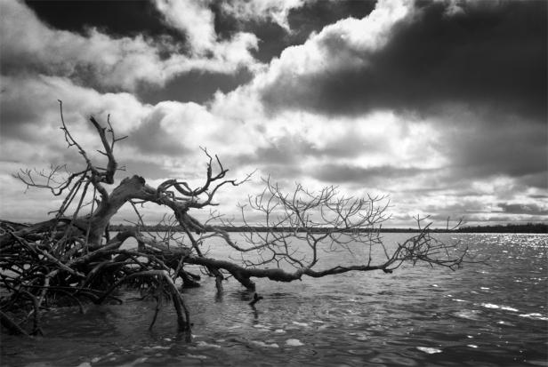 Oyster Bay web